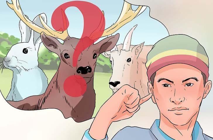 چگونه باید شکار کنیم؟