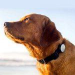 راهنمای خرید ردیاب سگ