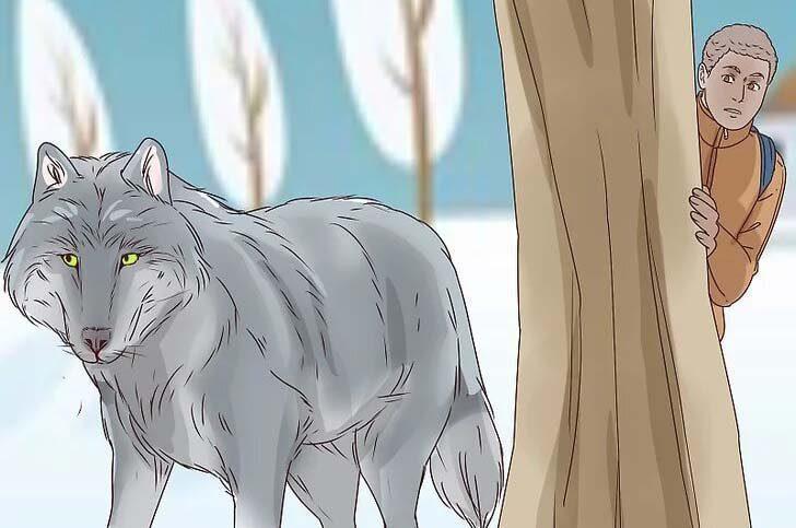 دوری از گرگ