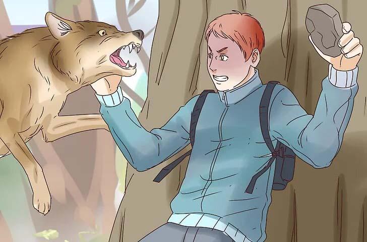 به گرگ حمله کنید