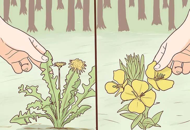 گیاهان خوراکی