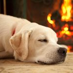 گرم کردن سگ در زمستان